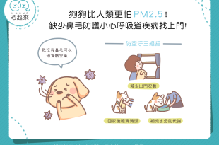 狗狗比人類更怕 PM2.5!缺少鼻毛防護小心呼吸道疾病找上門!