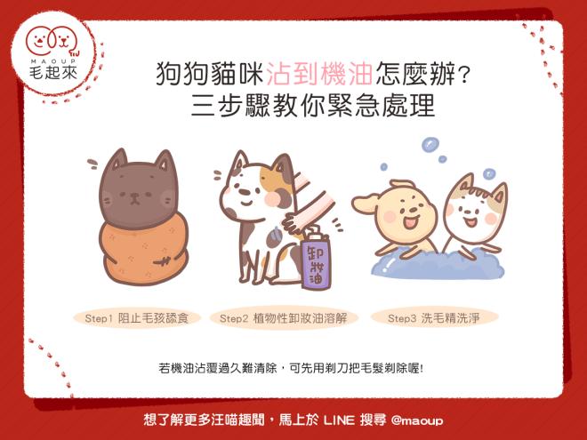 【汪喵生活家】狗狗貓咪沾到機油怎麼辦?三步驟教你緊急處理