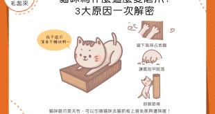 貓咪為什麼那麼愛磨爪?3大原因一次解密!