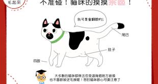 【喵喵小學堂】不准碰!貓咪的摸摸禁區!