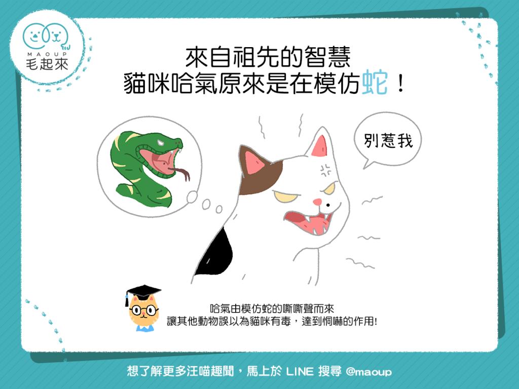 祖先的智慧!貓咪哈氣原來是在模仿蛇!