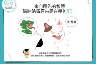 原來貓咪哈氣是在模仿蛇!