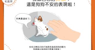 【汪汪行為學】狂舔自己的鼻頭?這是狗狗不安的表現啦!