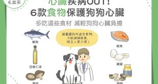 遠離狗狗心臟疾病!六款食物保護狗狗心臟