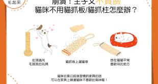 崩潰!主子又不賞臉 貓咪不用貓抓板/貓抓柱怎麼辦?