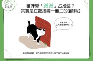貓咪靠「蹭蹭」占地盤?其實是在散播獨一無二的喵味啦!
