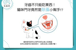 牙齒不只能吃東西!貓咪門牙竟然是除蚤小幫手!?