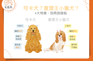 【汪汪小百科】可卡犬?查理王小獵犬?四大特徵教你怎麼分辨!