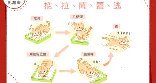 貓咪如廁五步驟!挖、拉、聞、蓋、逃