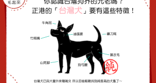 你認識台灣狗界的元老嗎?正港的「台灣犬」要有這些特徵!