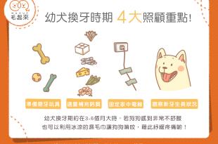 狗狗換牙時期4大照護重點