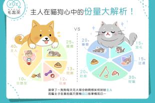 【毛孩行為學】主人在貓狗心中的分量大解析!