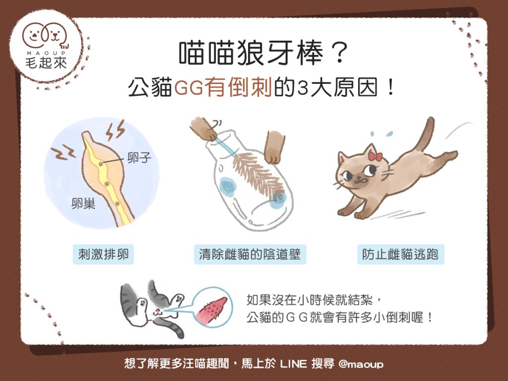 喵喵狼牙棒?公貓GG有倒刺的三大原因!