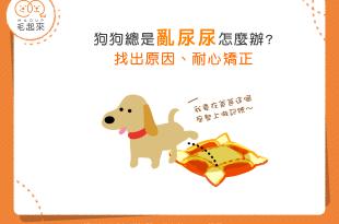 【汪喵家居】狗狗總是亂尿尿怎麼辦?找出原因、耐心矯正