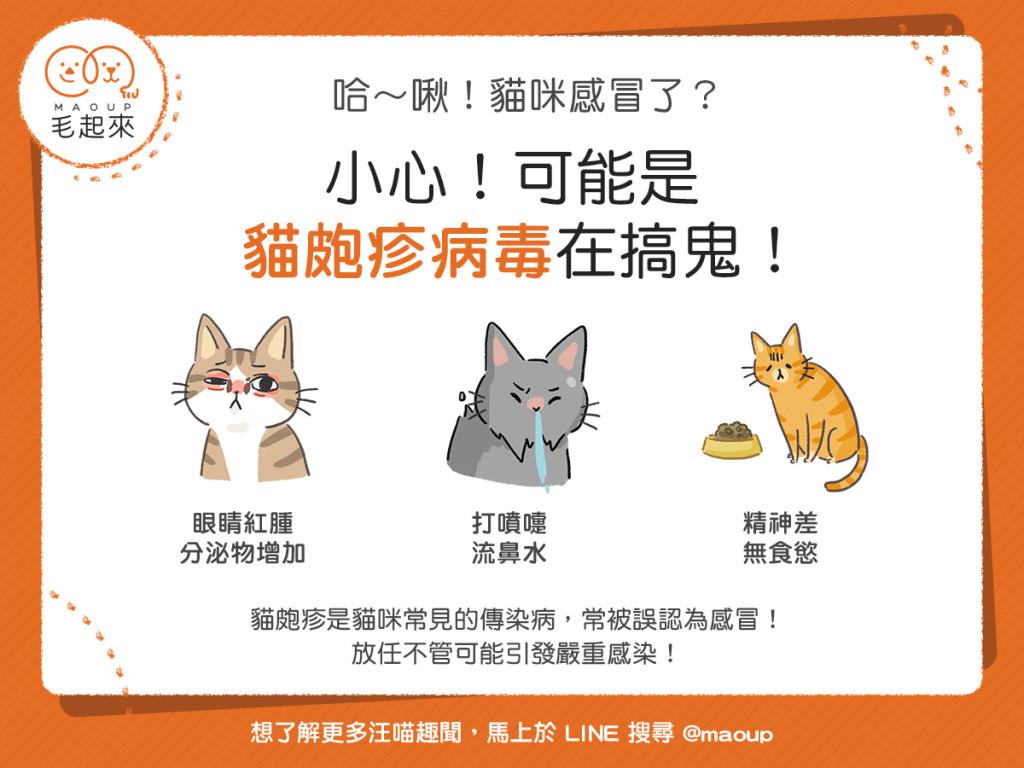 小心!可能是貓皰疹病毒在搞鬼!