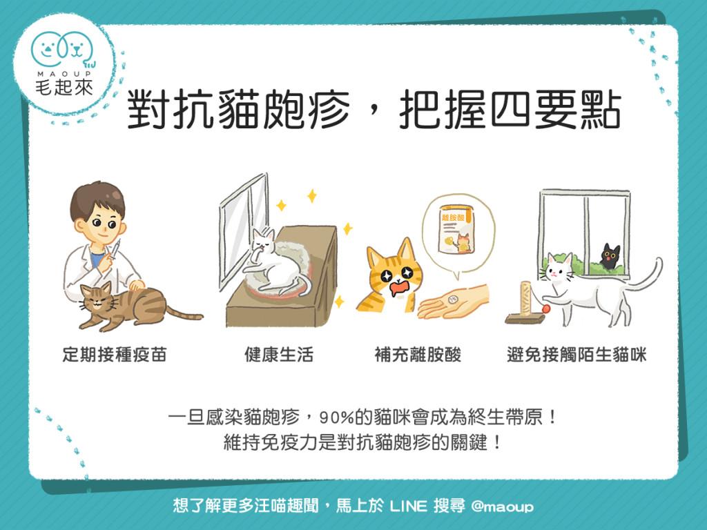 對抗貓皰疹的四個照護要點