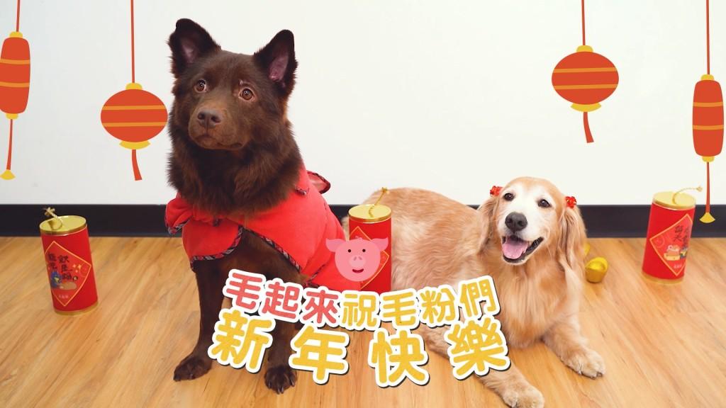 花開富貴好運到~喜迎金豬玫瑰餃.mp4_20190130_114346.491
