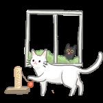 避免接觸陌生貓咪