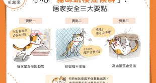 小心「貓咪跳樓症候群」!居家安全三大要點