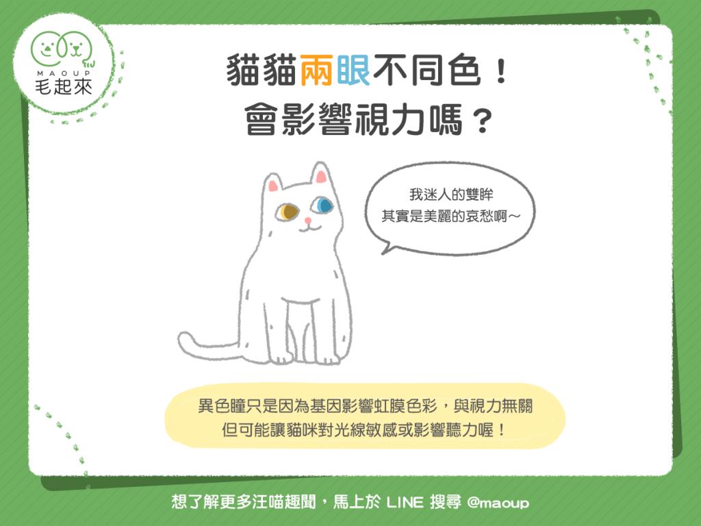 181219_1_貓貓兩眼不同色,會影響視力嗎