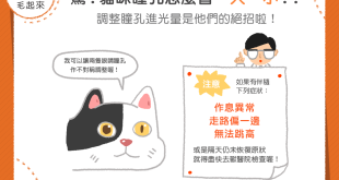 181219_2_驚!貓咪瞳孔怎麼會一大一小
