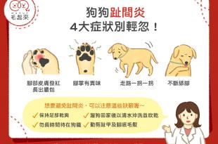 狗狗趾間炎4大症狀