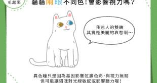 【喵喵小學堂】貓貓兩眼不同色!會影響視力嗎?