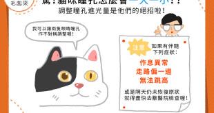 【喵喵小學堂】驚!貓咪瞳孔一大一小!?原來他們可以調整瞳孔進光量!