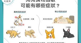 狗狗食物過敏可能有哪些症狀