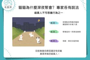 貓貓為什麼深夜聚會?專家各有說法