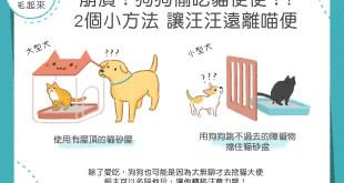 190130_1_崩潰狗狗偷吃貓便便_FB_小路改