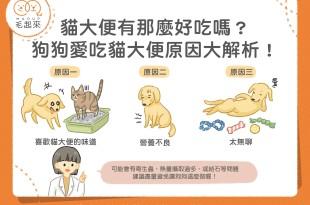 貓大便有那麼好吃嗎?狗狗愛吃貓大便原因大解析!