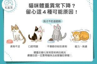 貓咪體重異常下降?留心這4種可能原因!
