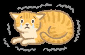 貓體重下降_4