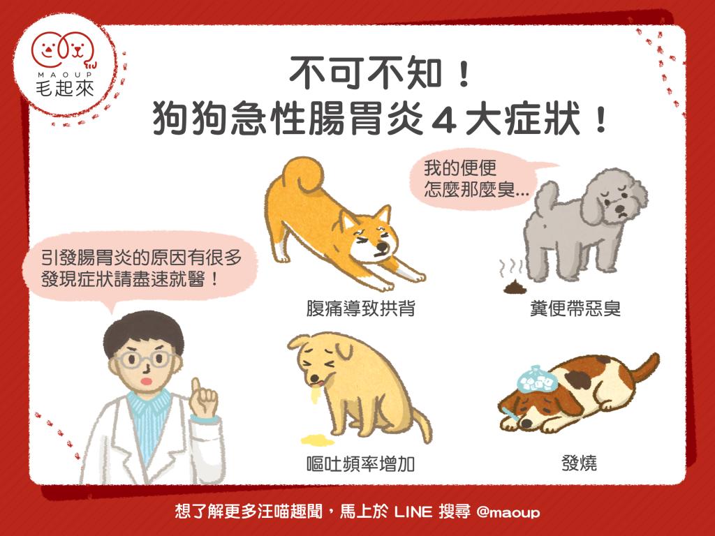 狗狗急性腸胃炎常見4症狀