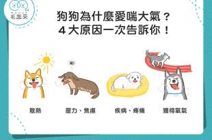 狗狗為什麼一直喘氣