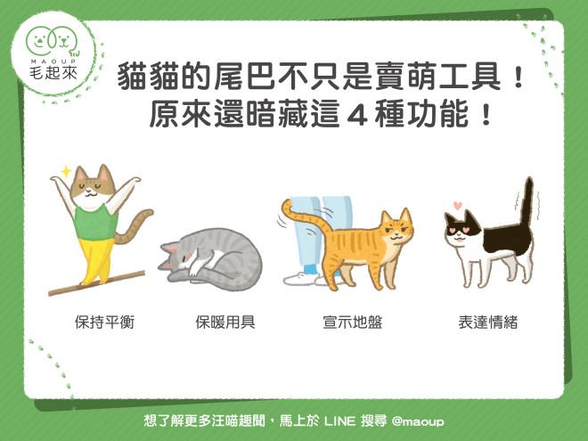 190624_貓貓的尾巴不只是賣萌工具
