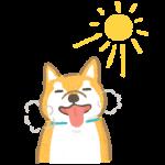 狗狗喘氣為了散熱