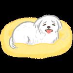 狗狗因為疾病、疼痛而喘氣