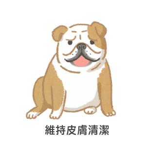 短鼻犬夏天維持皮膚清潔