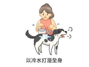 狗狗中暑時以冷水打濕全身