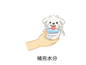 狗狗中暑時多補充水分