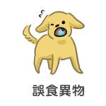 誤食異物導致狗狗便秘