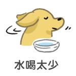 水喝太少導致狗狗便秘