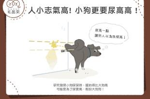 【汪汪行為學】人小志氣高!小狗更要尿高高!