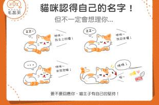 【貓貓小學堂】貓咪認得自己的名字!但不一定想理你…