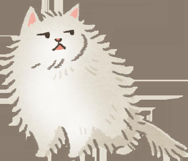 200213_鄙視的貓