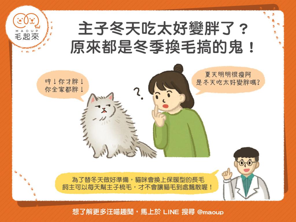 【貓貓小學堂】主子吃太好變胖了?原來都是冬季換毛搞的鬼!
