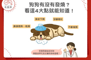 【汪汪康健】狗狗有沒有發燒?看這4大點就知道!