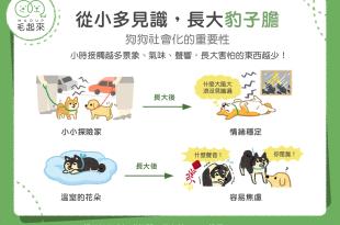 狗狗社會化